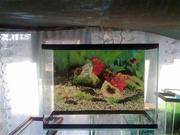 продажа-аквариумов терариумов рыбок растения