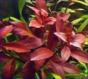 Продаютса шикарные растения